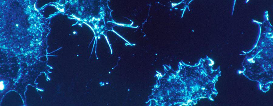 Cancer_cells_(1)_nano